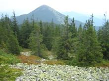 Khomiak Mountain, trekking in the Carpathians, Ukraine