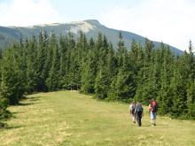 Khomiak meadow, trekking in the Carpathians, Ukraine